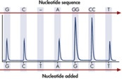 Principle of Pyrosequencing – Step 5