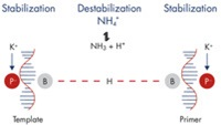 Specific primer annealing using a balanced combination of K+ and NH4+ ions