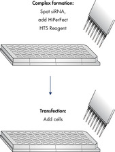 High-throughput transfection using HiPerFect HTS Reagent.