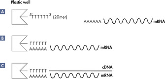 mRNA purification and cDNA synthesis in the same well.