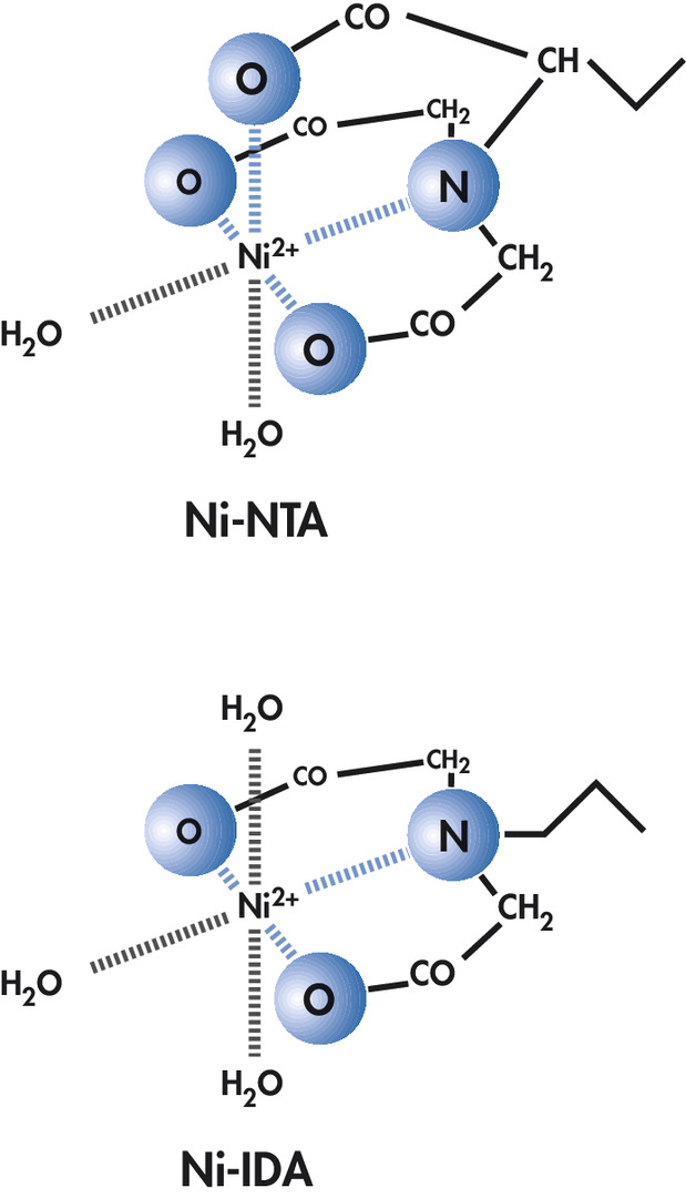 The extra coordination site (arrowed) in Ni-NTA binds nickel more tightly than IDA (the ligand used in many competitor resins).