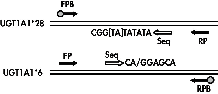 Illustrations of the <em>therascreen </em>UGT1A1 assays.