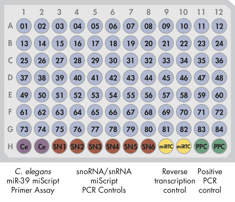 Pathway-Focused or miRNome miScript miRNA PCR Array layout for plate formats A, C, D, F, M.