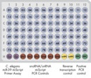 Pathway-Focused or miRNome miScript miRNA PCR Array layout for plate formats A, C, D, F