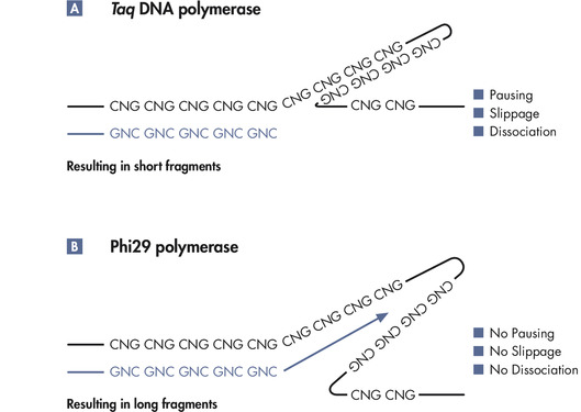 Unbiased amplification with Phi29 polymerase