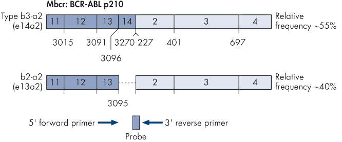 Single plasmid for BCR-ABL gene transcript.
