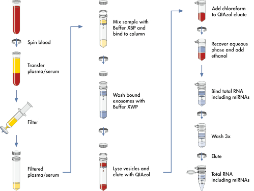 The exoRNeasy Serum/Plasma Maxi Kit workflow - sample to microvesicles to total RNA, in just one hour.