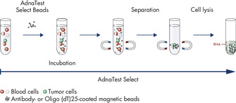 AdnaTest Select – Immunomagnetic cell selection with multiple tumor-associated