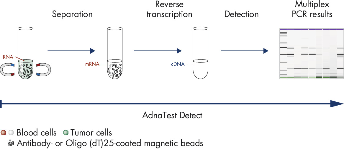 Figure 5: AdnaTest LungCancerDetect for analysis of various cancer-associated tumor markers.