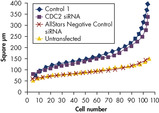 AllStars Negative Control siRNA Does Not Affect Nuclear Size Phenotype