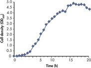 Growth curve of E. coli in LB medium