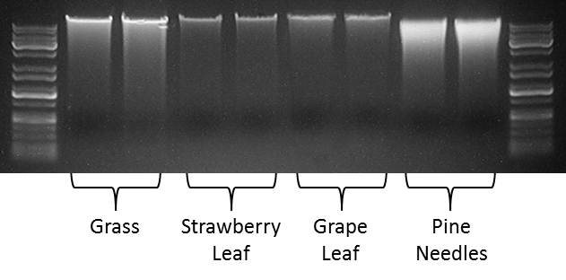 Figure 1. High-throughput processing of DNA from tough plant sample types.