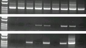 Figure 2: Confidence in your PCR analysis
