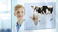 Veterinary subvisual cow