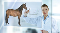 Veterinary subvisual horse